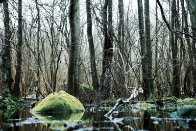 Myr i Skogen