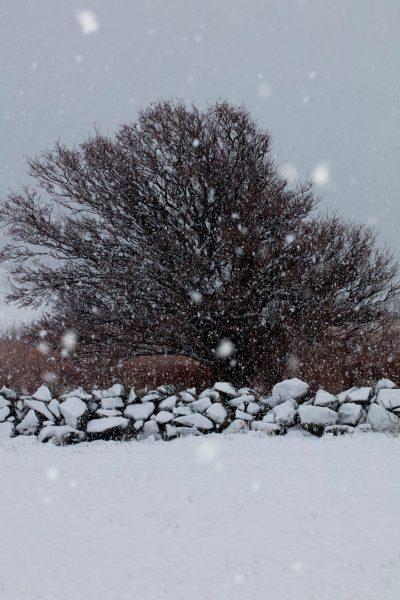 Tre Snø