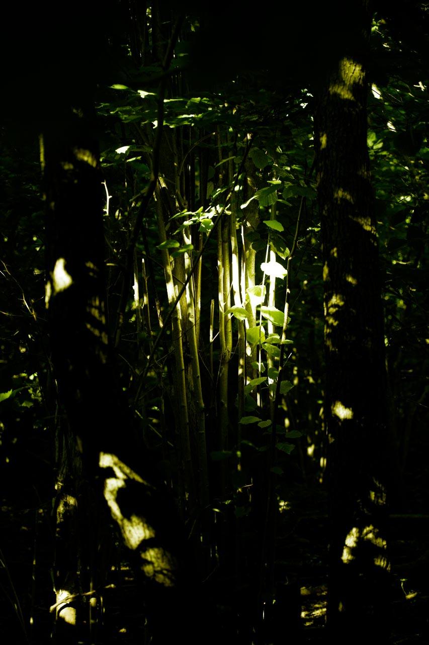 Løvskog 3