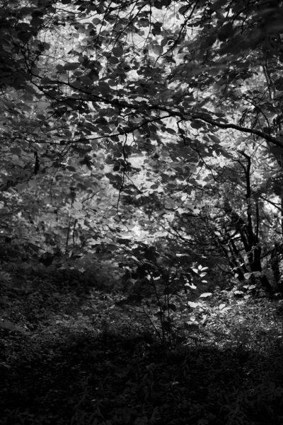 Løvskog