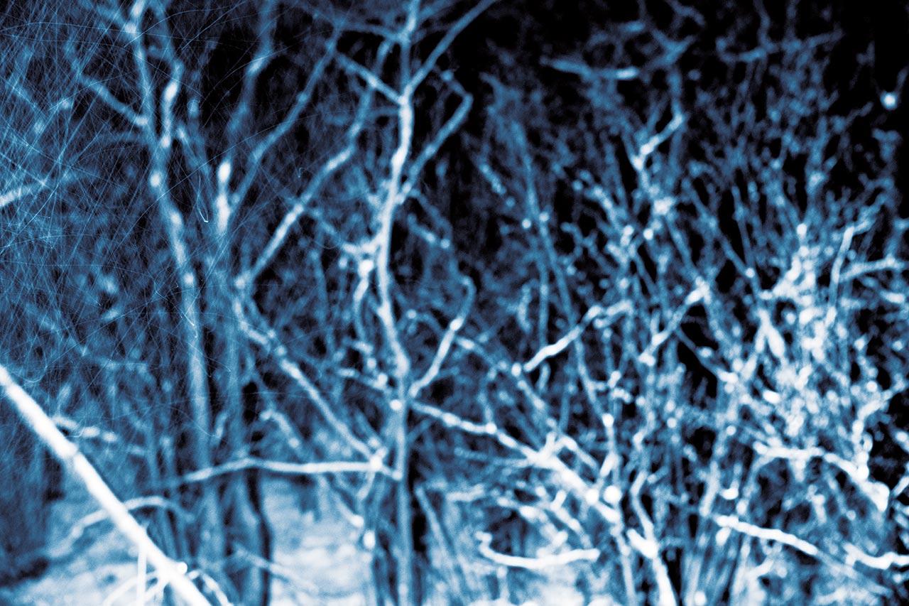 Blåskog
