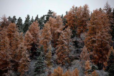Trær høst