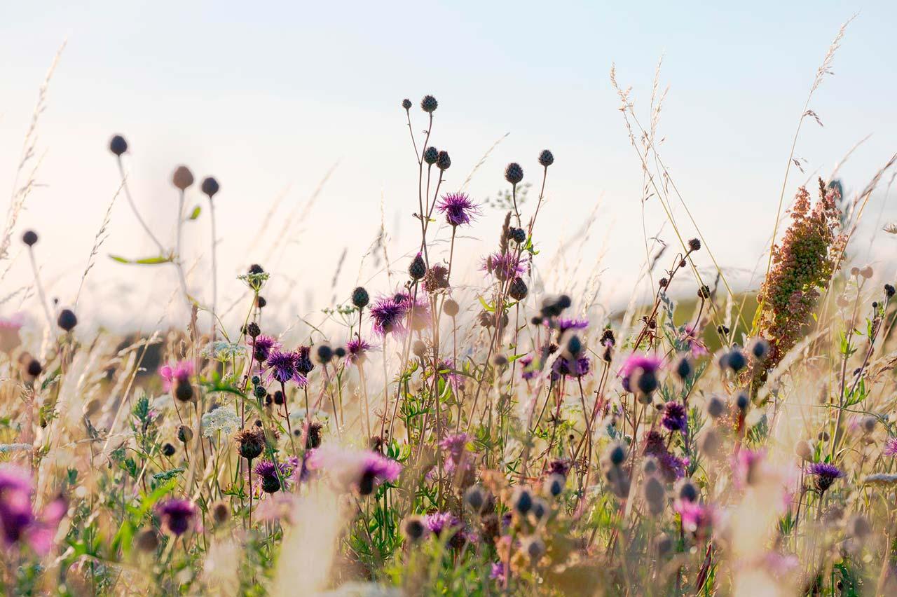 Blomster Syd